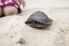 Pet turtle Stock Images