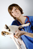 Pet and vet Royalty Free Stock Photos
