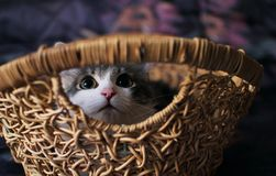 Home kitten sitting in the basket stock images