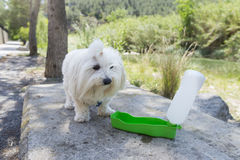 Pet and water. Stock Images