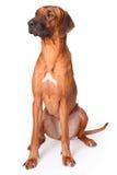 Pet on white Stock Photo