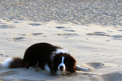 A Pet on white sand stock photography