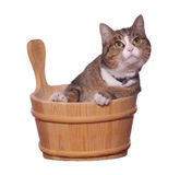 Pet in wooden bowl Royalty Free Stock Images