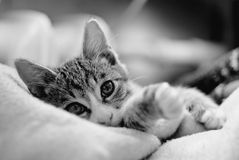 Cats love. Pet at a young age.little kitten sleeping Stock Photos