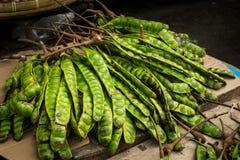 Petai exotic food bean photo taken in bogor jakarta indonesia Royalty Free Stock Images
