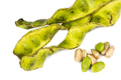Petai seeds with its seed pods and cluster Royalty Free Stock Image