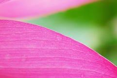 Petal Stock Photography