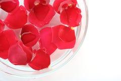 Petal stock image