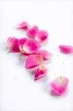 petal royaltyfri bild