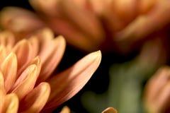 Petal. Still life and macro photography Stock Image
