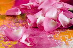 Petal on artwork background Stock Photos