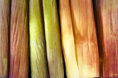 Petal av bananblomningen Arkivfoto