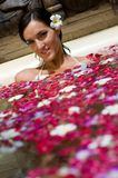 Petal Bath Stock Image
