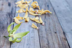 Petal of Climbing Ylang-Ylang, Manorangini, Hara-champa, Kantali Royalty Free Stock Photos