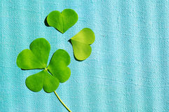Petal of clover on the blue linen painted canvas, close up. St. Patricks Day Royalty Free Stock Photo
