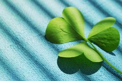 Petal of clover on the blue linen painted canvas, close up. St. Patricks Day Stock Image