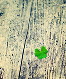 Petal of clover on old wooden background. St. Patricks Day green shamrock Royalty Free Stock Photos