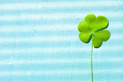 Petal of clover on the painted canvas, close up. St. Patricks Day green shamrock . Royalty Free Stock Photography