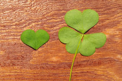Petal of clover on a wooden table surface. St. Patricks Day green shamrock. Petal of clover on a wooden table surface, close up. St. Patricks Day green shamrock Stock Image