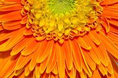 Petal of daisy stock image
