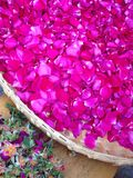 Edible rose petal Royalty Free Stock Photography