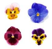 petal för blomma fyra arkivfoto