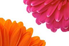 Petal flower Stock Photo