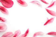 Petal frame Royalty Free Stock Photos