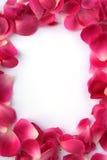 Petal Frame Stock Images