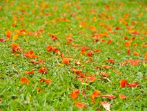 Petal on grass field Stock Images