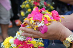 Petal hands. Petal pink and yellow on the hands of the elderly are watering apology royalty free stock images