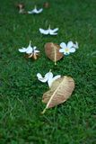 Petal and leaf in the grass. Petal and leafs in the grass Royalty Free Stock Images