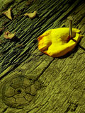 A petal murder Royalty Free Stock Image