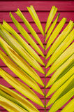 Petal Palm Leaf on Blur Colorful Deep Wall Background Stock Image