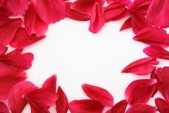 petal ramowy Zdjęcia Stock