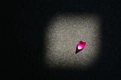 A petal Royalty Free Stock Image