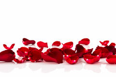 Petal of Red rose . Stock Photo