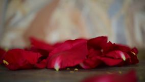 Red rose flower on wooden floor in Valentine`s Day. Petal of red rose flower nature beautiful flowers from the garden for valentines on wooden floor with copy stock video footage