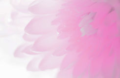 Petal soft shades of sweet sweet style. Showroom Royalty Free Stock Photo