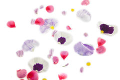 Petal. Viola and chives flower petal. isolated on white background Royalty Free Stock Images