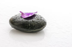 Petal with water drops on a spa stone Stock Photo