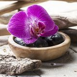 Petal and wood for ayurveda or feng shui mindset. Closeup on pink orchid and black pebbles with wood and limestone background for beauty spa Stock Images
