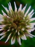 petali Fotografie Stock