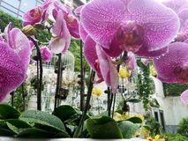 petali Fotografia Stock