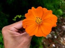 Petali arancioni Fotografia Stock
