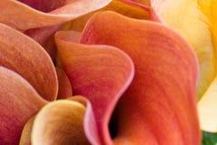 Petali astratti del fiore Fotografia Stock Libera da Diritti