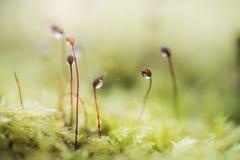 Petali crescenti del muschio 4 Fotografie Stock