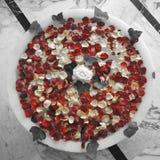 Petali del fiore Fotografie Stock