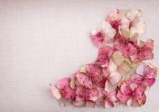 Petali del fiore dell'ortensia nel giusto angolo inferiore sul backgro del tessuto Fotografia Stock