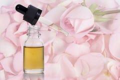 Petali del fiore della rosa di rosa ed olio essenziale Fotografia Stock Libera da Diritti
